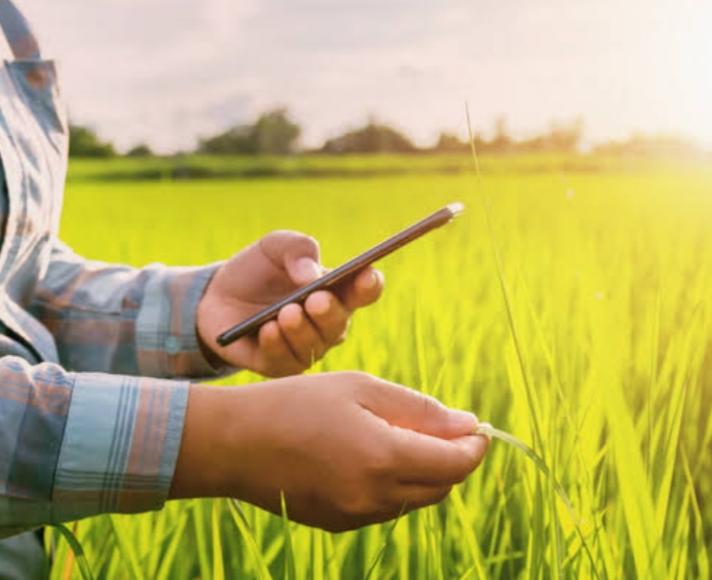 ખેડૂતો માટે પાકમાં જંતુઓની સંખ્યાને નિયંત્રણમાં રાખવા માટે સોલાર લાઈટ ટ્રેપ ખુબજ ઉપયોગી|ભરૂચ,Bharuch - Divya Bhaskar