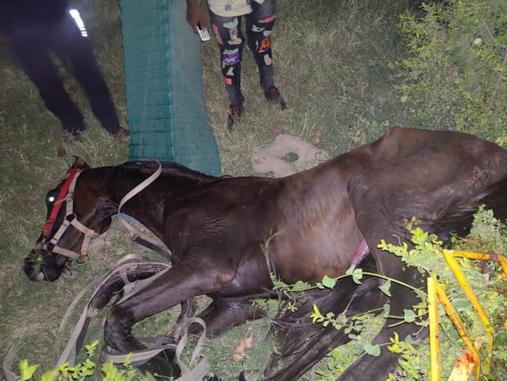 રવિવારના શહેરના જિલ્લા પંચાયત સામેના બગીચામાં ઘોડો બેકાબૂ બનતા અકસ્માત સર્જાયો હતો અને ઘોડાે જીવન મૃત્યુ વચ્ચે ઝોલા ખાઇ છે. - Divya Bhaskar