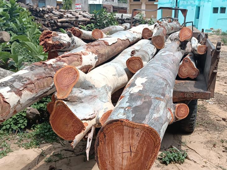 જંગલખાતાએ લાકડાના જથ્થા સાથે ઝડપી પાડેલા વાહનો તસવીરમાં જણાય છે. - Divya Bhaskar