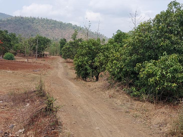 આઝાદીના 74 વર્ષ બાદ પણ માનકુનિયાના મેઇન રસ્તાથી આદિમજૂથ ખોરાફળિયાને જોડતો રસ્તો બિસમાર. - Divya Bhaskar
