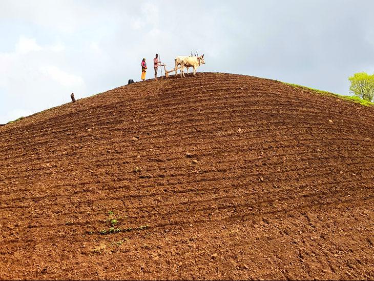 નસવાડીના ડુંગર વિસ્તારમાં જંગલ જમીન ખેડી રહેલ ખેડૂત. - Divya Bhaskar
