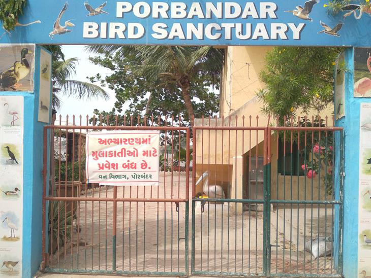 નવી ગાઇડલાઇન આવશે બાદ બરડા તથા પક્ષી અભ્યારણ્ય ખુલ્લુંમૂકાશે|પોરબંદર,Porbandar - Divya Bhaskar