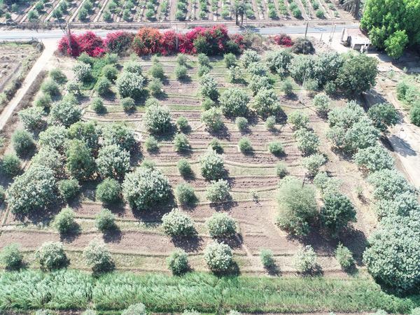 કાજુનો એક  રોપ 40થી 100 રૂપિયામાં મળતો હોય છે અને ત્રણથી ચાર વર્ષે એમાં ફળ લાગવાનું શરૂ થાય છે. - Divya Bhaskar