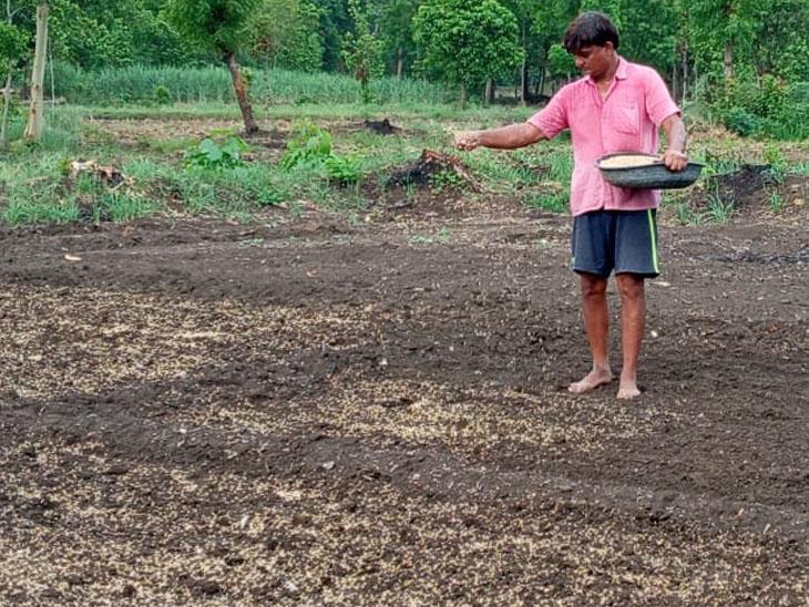 ખેતરમાં ધરૂ નાંખી તૈયારી કરતા કોષના ખેડૂત - Divya Bhaskar