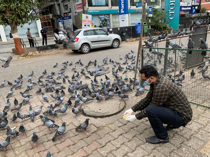 પક્ષીઓના ખોરાકમાં ગાંઠિયા નાખવા જોઈએ નહીં: એનિમલ લાઇફકેરની અપીલ અમદાવાદ,Ahmedabad - Divya Bhaskar