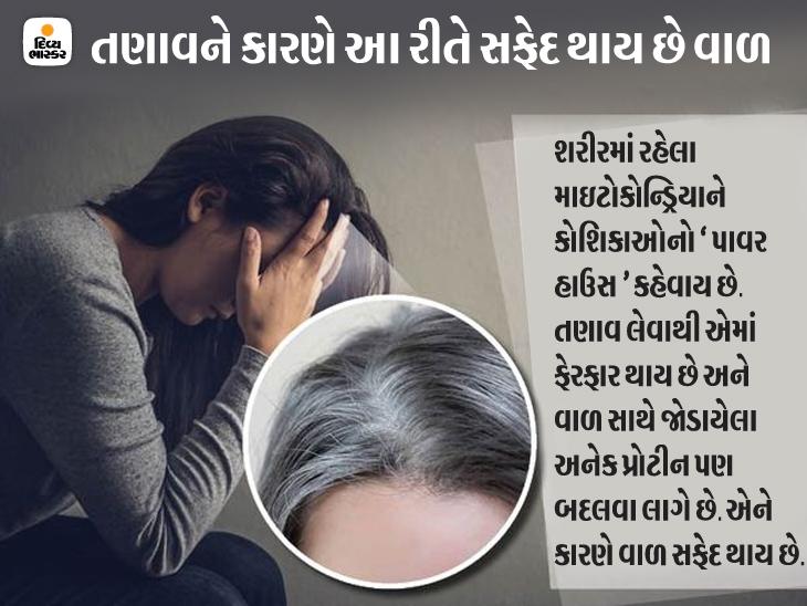 તણાવ ઓછો લેવાથી તમારા સફેદ થયેલા વાળ ફરી કાળા થઈ શકે છે, અમેરિકાના વૈજ્ઞાનિકોનો ચોંકાવનારો દાવો|હેલ્થ,Health - Divya Bhaskar