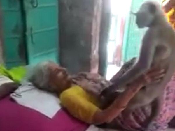 વાંદરો પહેલાં વૃદ્ધ મહિલાની ઉપર આવીને બેસી ગયો