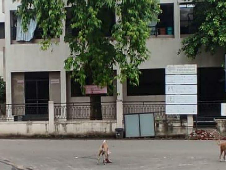સયાજી હોસ્પિટલના કોલ્ડરૂમની સામે જ કૂતરૂ માનવ અંગ ખાતુ હોવાનું તસવીરમાં સ્પષ્ટ દેખાય છે - Divya Bhaskar