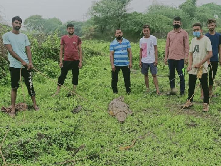 GSPCA સંસ્થાએ વન વિભાગની મદદ લઇને મગરને ઝડપી લેતા ગ્રામજનોએ હાશકારો અનુભવ્યો હતો