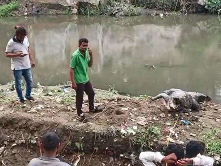 વિશ્વામિત્રી નદીમાં કેમિકલયુક્ત અને દૂષિત પાણી છોડવામાં આવે છે