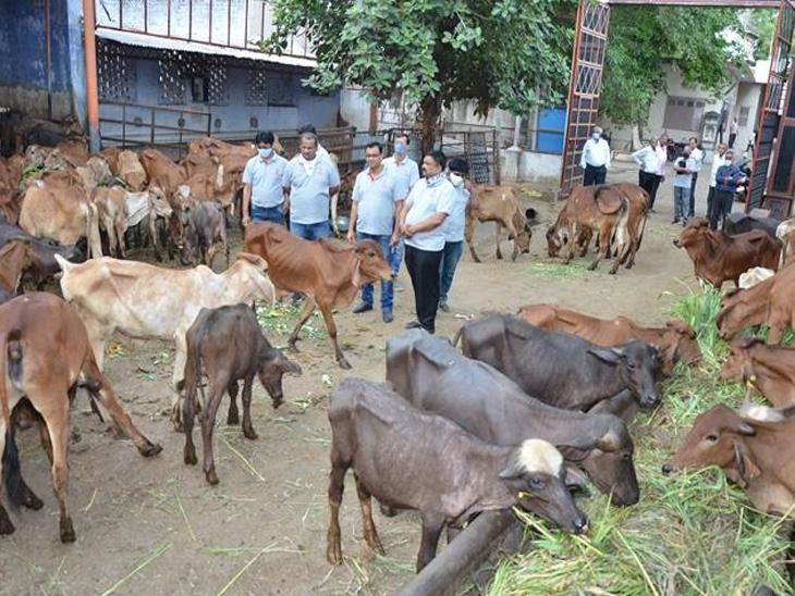 મંદબુદ્ધિના લોકોને ભોજન,પશુઓને ખોળ તથા ઘાસચારો ખવડાવ્યો હતો. - Divya Bhaskar