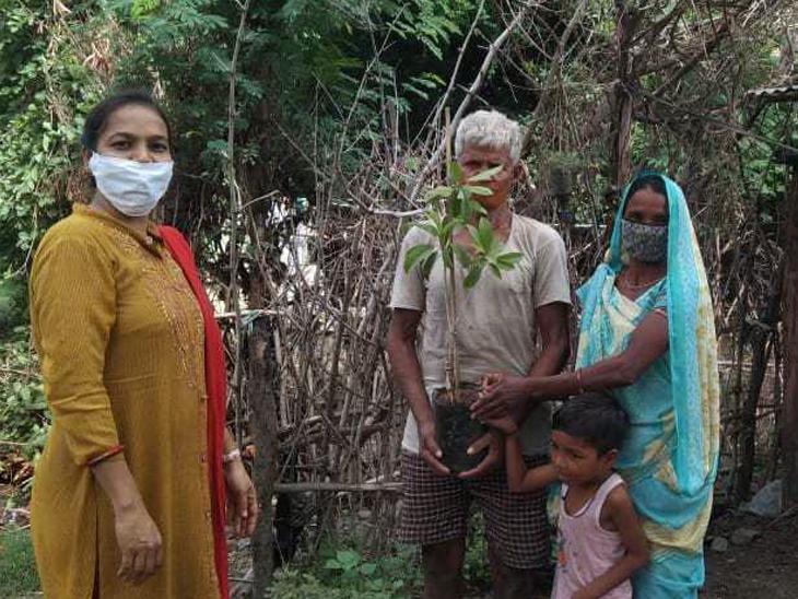 ગોપાલપુરાની પ્રાથમિક શાળાની શિક્ષિકાએ 10 બાળકોના ઘરે જઈને ચીકુ અને જામફળના રોપા આપી તેમના હાથે વૃક્ષારોપણ કરાવી શાળા પ્રવેશોત્સવ કરાવ્યો હતો. - Divya Bhaskar