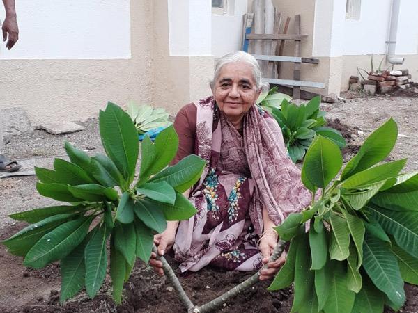 ગોંડલમાં બાળાથી લઈ દાદીમાએ કર્યું મિનિ ઓક્સિજન પાર્કનું નિર્માણ|ગોંડલ,Gondal - Divya Bhaskar