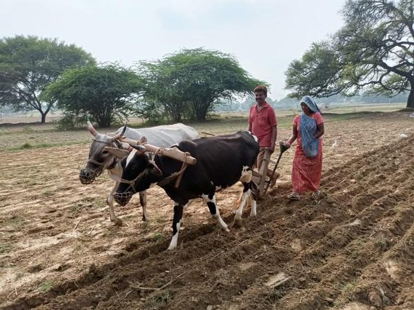 ગરબાડા તાલુકામાં વાવણીમાં જોતરાયેલા ખેડૂત. - Divya Bhaskar