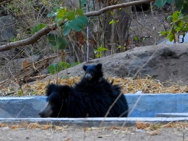 જિલ્લામાં જંગલમાં 98 પોઇંટ ઉપર વન્ય પ્રાણીઓની ગણતરી કરાઇ હતી. - Divya Bhaskar