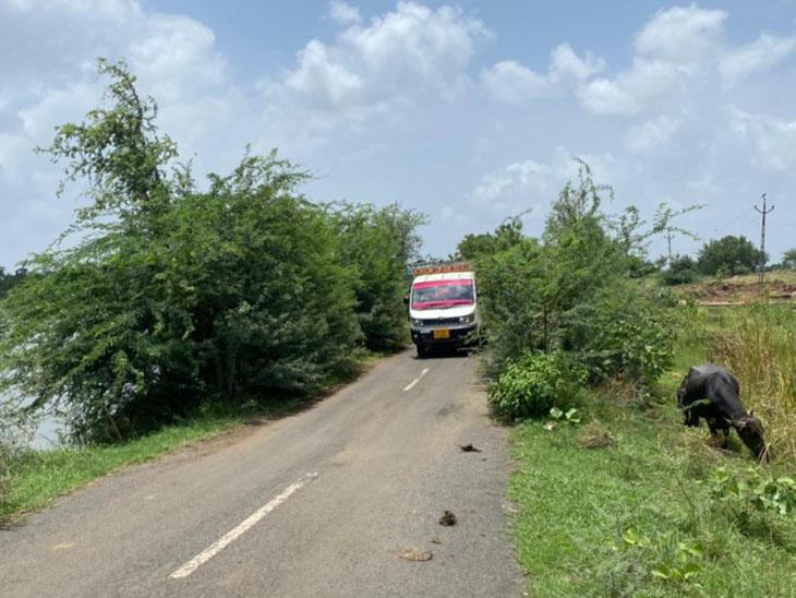 રસ્તાની બન્ને બાજુએ વૃક્ષોની ડાળીઓ લગોલગ આવી હોય અવરજવરમાં આફત નોતરે છે - Divya Bhaskar