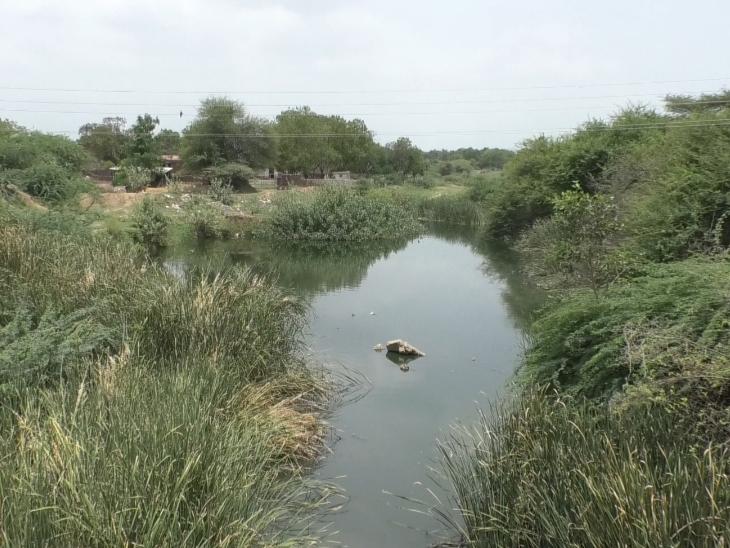 ગઢ- મડાણા નજીક લડબી નદીમાં ઝાડી - ઝાંખરા ઉગી નીકળ્યા  - Divya Bhaskar
