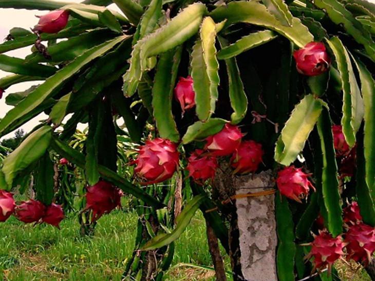 સહાયની યોજનાને લીધે આર્થિક ભારણમાં મદદ મળતાં નાના અને મધ્યમ ખેડૂતો આ ખેતી કરી શકશે