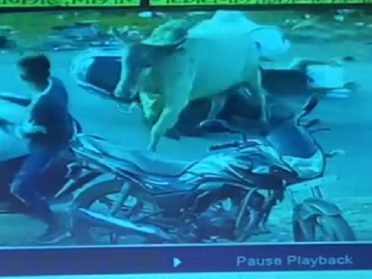 વલસાડમાં આખલાએ વાહનચાલક મહિલાને અડફેટે લીધી હતી