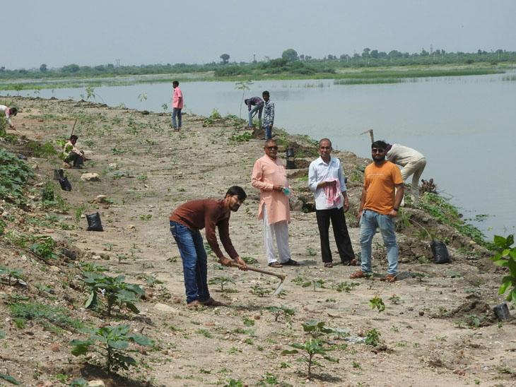 પાટડી નગરપાલિકા દ્વારા શક્તિમાતાના મંદિરના ફરતે તળાવ કિનારે લાઇનબધ્ધ800રોપાનું વાવેતર કરાયું. - Divya Bhaskar