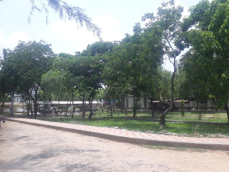 વઢવાણની સી.યુ. શાહ સરકારી પોલીટેકનીકમાં 1000થી વધુ વૃક્ષોનું જતન કરાય છે. - Divya Bhaskar
