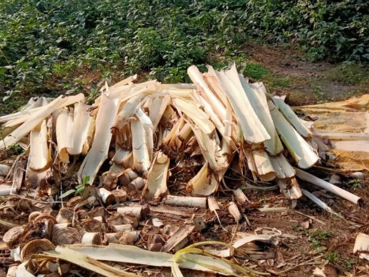 કેળાંના સ્ટેમને અલગ-અલગ શીટ્સમાં કાપ્યા પછી એના ફાઈબર તૈયાર કરવામાં આવે છે.પછી ફાઈબરથી પ્રોડક્ટ બને છે.