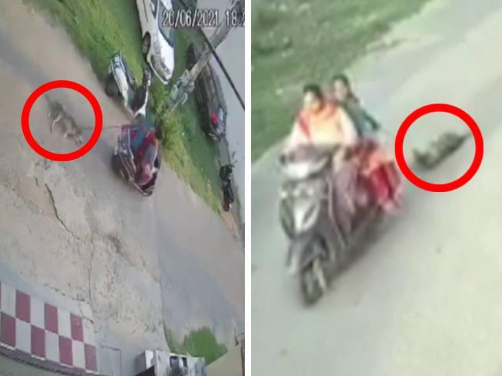 એક્ટિવા પર જતી બે મહિલાએ કૂતરાંને રોડ પર ઢસડ્યો, જુઓ શૉકિંગ CCTV ફૂટેજ|ઈન્ડિયા,National - Divya Bhaskar