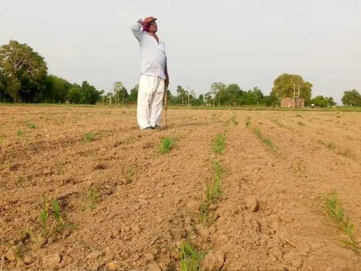 રાજ્યમાં વરસાદ ખેંચાવાની સ્થિતિમાં ખેડૂતોને સિંચાઈ-પાણી માટે 7 જુલાઇથી વધુ બે કલાક વીજળી અપાશે|ગાંધીનગર,Gandhinagar - Divya Bhaskar