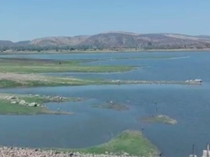 વરસાદે રીતસરની હાથતાળી આપતાં ગુહાઇ ડેમમાં માત્ર 11.25 ટકા જ પાણીનો જથ્થો બચ્યો - Divya Bhaskar