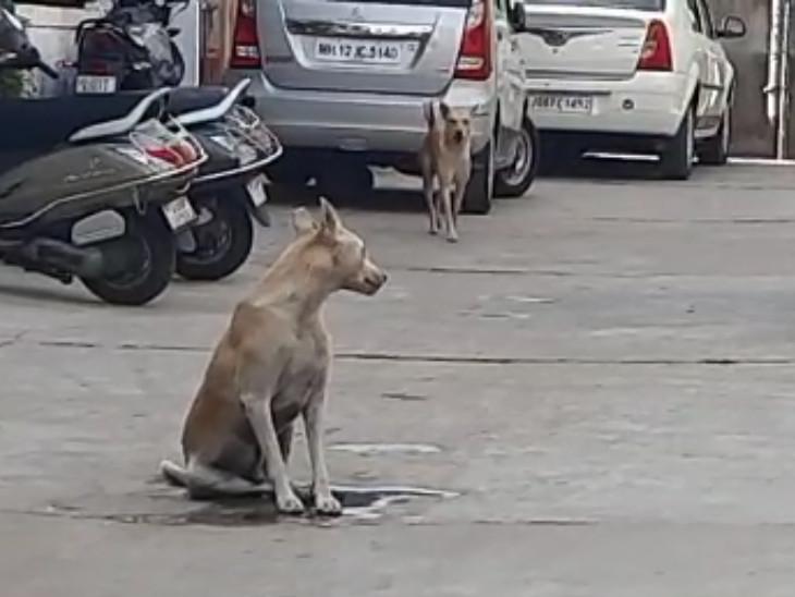 આશરે 20 જેટલા કૂતરાઓએ નાના બાળકો સહિત રહીશોનું ઘર બહાર નીકળવું મુશ્કેલ કરી દીધું.