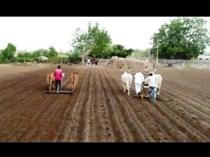પાણીની સગવડ ધરાવતા ખેડૂતોએ આગોતરૂ વાવેતર શરૂ કર્યું - Divya Bhaskar