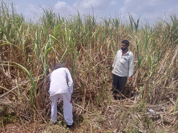 ભેંસાણના તડકાપીપળિયાના ઉપસરપંચ 6 વર્ષથી ઉનાળુ પાક નથી લેતા. - Divya Bhaskar