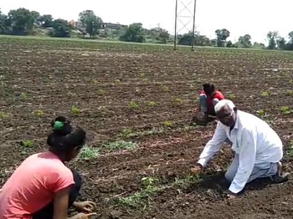 વરસાદ ન થતાં ખેતરોમાં થયેલ વાવણી નિષ્ફળ જવાની ભીતી ભેંસાણ,Bhesan - Divya Bhaskar
