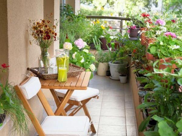 ઘરની બાલ્કની કે પછી છત પર ટેરેસ ગાર્ડન બનાવવા વર્ટિકલ ગાર્ડન સિલેક્ટ કરો, થીમ અને હવામાન પ્રમાણે ફલોરિંગ પ્લાન કરવું લાઇફસ્ટાઇલ,Lifestyle - Divya Bhaskar