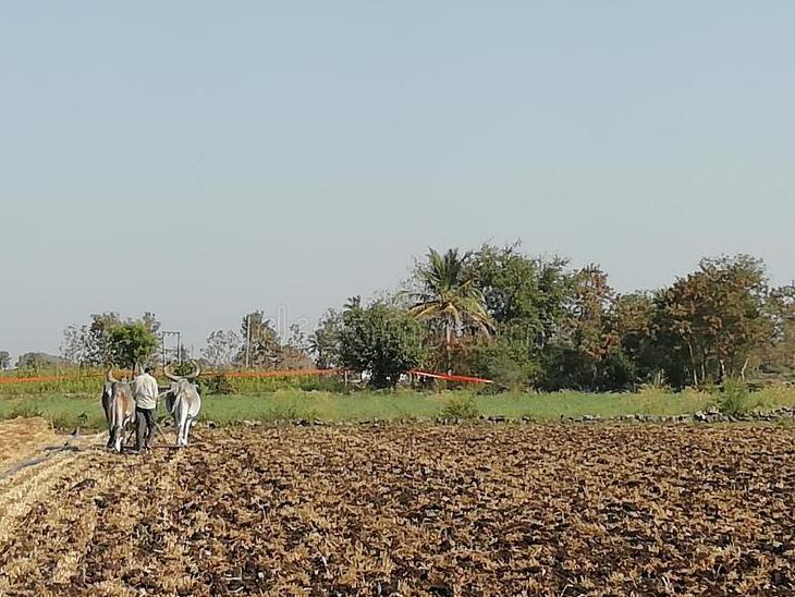 સાણંદ તાલુકામાં વરસાદ ખેંચાતાં સિંચાઈ માટે પાણી અને 12 કલાક વીજળી આપવા માગ|સાણંદ,Sanand - Divya Bhaskar