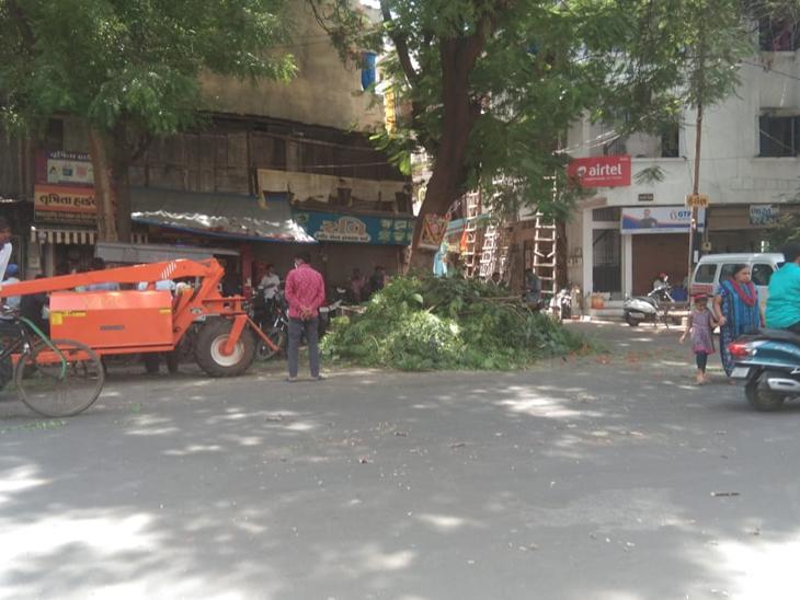 રથયાત્રાના પથ્થર ગેટ સહિતના રૂટ પર પાલિકા દ્વારા વૃક્ષોનું ટ્રિમિંગ શરૂ - Divya Bhaskar