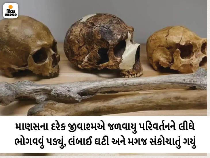 ક્લાઈમેટચેન્જને લીધે માણસોની લંબાઈ ઘટી અને મગજ સંકોચાવા લાગ્યું, વૈજ્ઞાનિકોએ 300 જીવાશ્મોના રિસર્ચમાં ખુલાસો કર્યો|લાઇફસ્ટાઇલ,Lifestyle - Divya Bhaskar