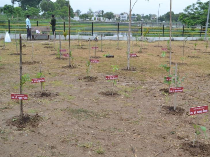 500થી વધુ વૃક્ષોનું જાપાનીઝ મિયાવાકી પદ્ધતિથી વૃક્ષારોપણ કરવામાં આવ્યું.