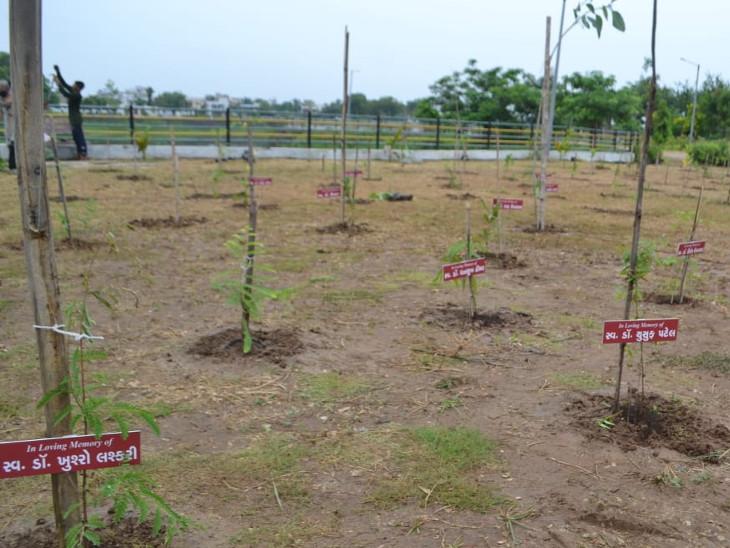 વિવિધ 30થી વધુ જાતોના દેશી વૃક્ષોનું ઘનિષ્ઠ વન બનાવવા વૃક્ષારોપણ કરવામાં આવ્યું.