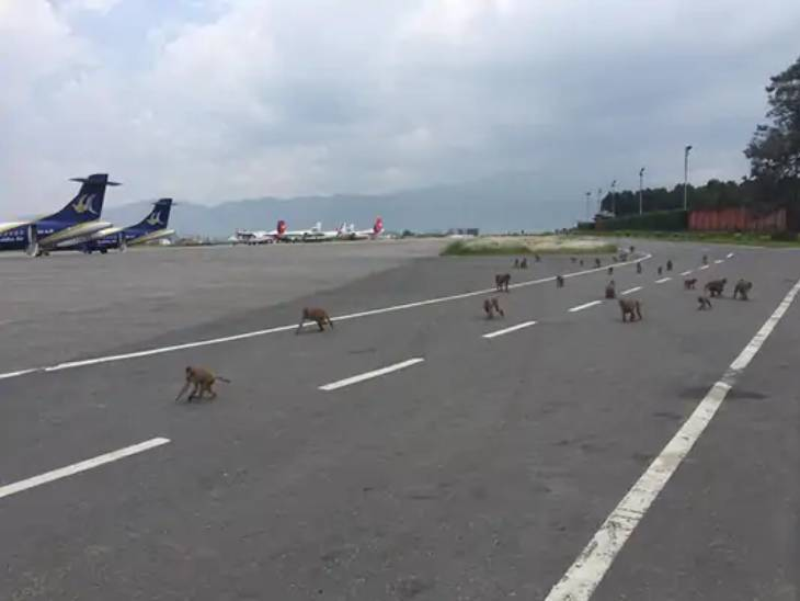 પ્રતિકાત્મક તસવીર- રનવે પર નાના-નાના પ્રાણીઓ પણ ઘૂસી આવે છે
