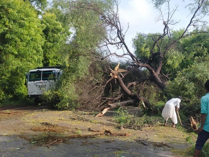 સરસ્વતીમાં પાટણ -શિહોરી હાઇવે પર વિશાળકાય બાવળ રસ્તા વચ્ચે જ ધરાશાયી થતાં બન્ને તરફથી રસ્તો બ્લોક થયો હતો. સત્વરે વૃક્ષ હટાવી રસ્તો ખુલો થતાં વાહનવ્યવહાર શરૂ થયો હતો. - Divya Bhaskar