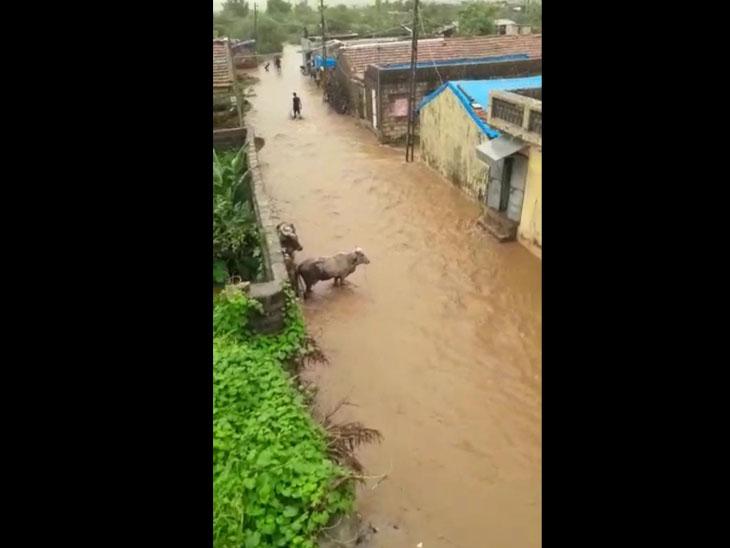 રાજુલામા આજે પાેણાે ઇંચ વરસાદ પડયાે હતેા. જયારે તાલુકાના ચાૈત્રા ગામે ધાેધમાર બે ઇંચ વરસાદ વરસી જતા ગામની ગલીઓમા જાણે નદી વહેતી હેાય તેમ પાણી વહ્યાં હતા. - Divya Bhaskar