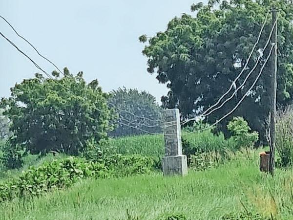 બાબેન મોતા રોડ પર આવેલા ખેતરમાં વીજલાઇન નમી જતા ખેડૂતોને હાલાકી. - Divya Bhaskar