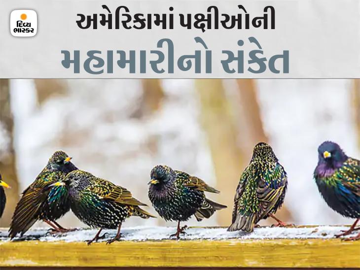 રહસ્યમય બીમારીથી પક્ષીઓની આંખોની રોશની છીનવાઈ, થાક અને દિશા ભૂલતાં ઊડી શકતાં નથી|હેલ્થ,Health - Divya Bhaskar