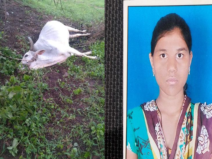 ચીચાણી ગામે વીજળી પડતા એક બળદ તથા યુવતીનુ મોત નિપજ્યુ હતું મૃતક યુવતીની ફાઇલ તસવીર. - Divya Bhaskar