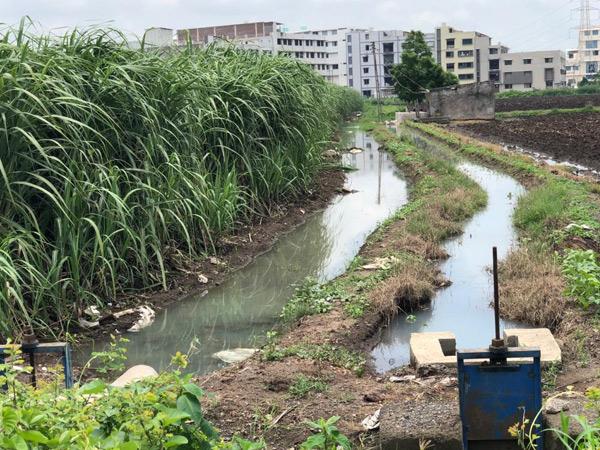 નજીકમાં આવેલા ઔદ્યોગીક કારખાનાઓ દ્વારા સિંચાઇની ફિલ્ડ ચેનલમ છોડવામાં આવતું કેમિકલ યુક્ત દૂષિત પાણી ખેતરોમાં ફરી વળતાં ખેડૂતોના ઉભા પાકને ભારે નુકસાન. - Divya Bhaskar