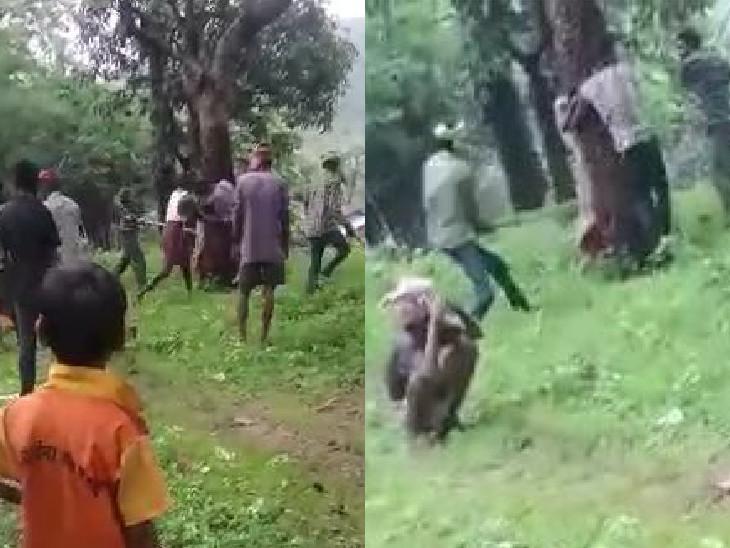 છોટાઉદેપુરના ચિલિયાવાંટમાં બે પરિવારે મળીને પ્રેમી-પ્રેમિકાને વૃક્ષ સાથે બાંધીને ઢોરમાર માર્યો, વીડિયો વાઇરલ થતાં 9 આરોપીની ધરપકડ વડોદરા,Vadodara - Divya Bhaskar