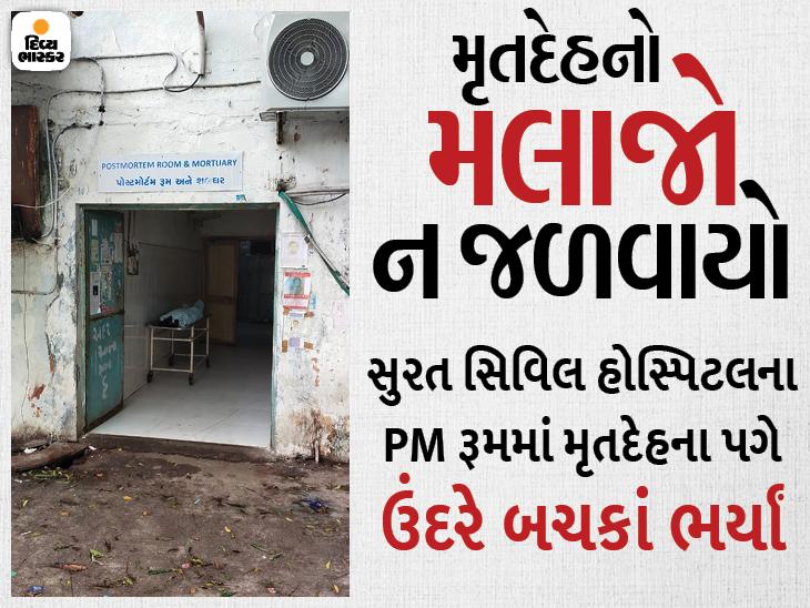 સુરત સિવિલ હોસ્પિટલના પોસ્ટમોર્ટમ રૂમમાં વૃદ્ધાના મૃતદેહને ઉંદરે કોતરી ખાતાં પરિવાર ગુસ્સે ભરાયો સુરત,Surat - Divya Bhaskar