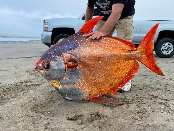 ઓરેગોનના દરિયાકાંઠે 45 કિલોની દુર્લભ માછલી મળી આવી,સ્થાનિકો માટે રોમાંચક તો વિશેષજ્ઞો માટે દુર્લભ ઘટના|લાઇફસ્ટાઇલ,Lifestyle - Divya Bhaskar