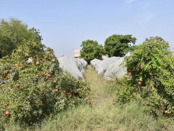 મૂળી તાલુકાના વડધ્રા ગામમાં સૌ પ્રથમ 20 વિઘા જમીન ખરીદી ખેતી શરૂ કરી હતી